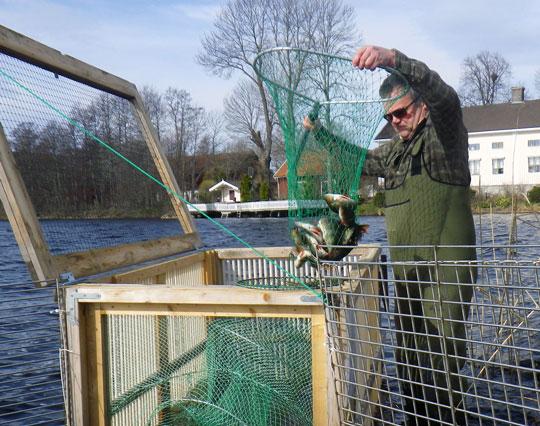 Lyckad fiskevårdsåtgärd gav effekt direkt!