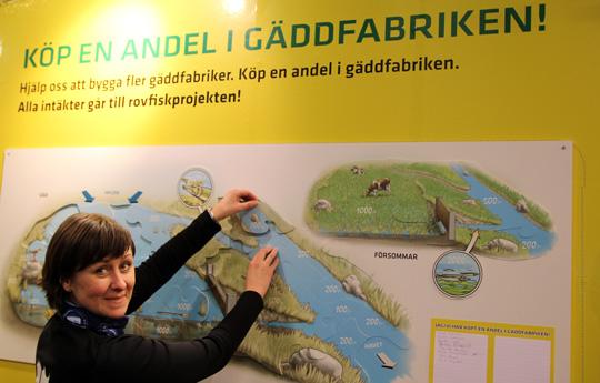 Stöd Rovfiskprojektet - köp en andel av vår våtmark!