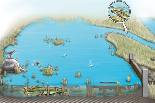 Våra aktiviteter på Sportfiskemässan