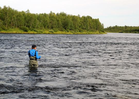 Sportfisket efter lax i Torneälven omsatte 53 miljoner 2014
