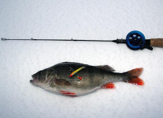 Lär dig fiska abborre med balanspirk!