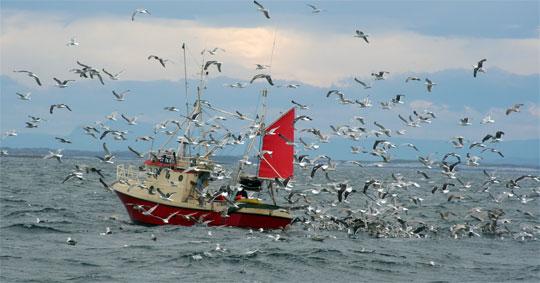 Sportfiskarna svarar på rapporten God Havsmiljö 2020