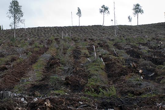 Skogsbruket orsakar kvicksilverläckage