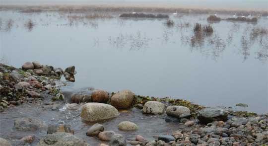Sportfiskarna fördelar 200 000 kr till lokal fiskevård
