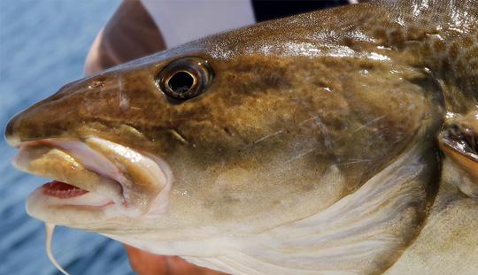 MITT-I-VECKAN-ERBJUDANDE på havsfisketurer i Öresund!