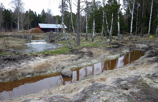 Omlöp i Varbosån på Gotland